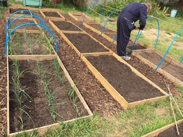 Getting ready for the brassicas and legumes